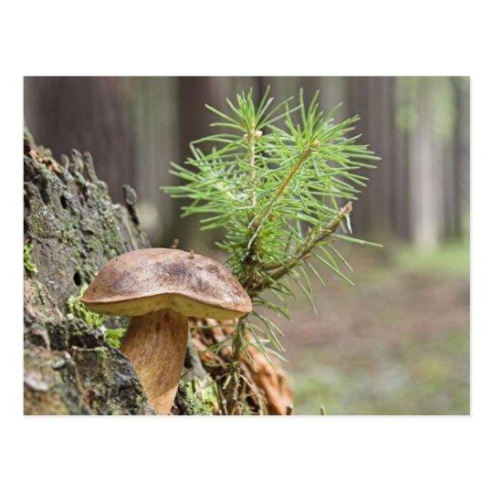Tiny Wild Mushroom Postcard