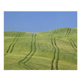Tire Tracks in Wheat Field, Val d'Orcia, Siena Poster