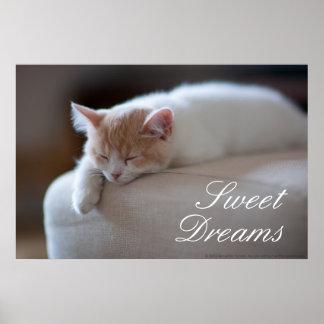 Tired Beige And White Kitten Sleeping On Ottoman Poster