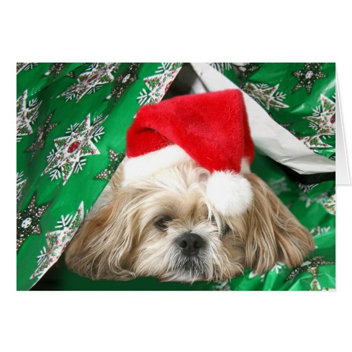 Tired Christmas Shih Tzu Greeting Cards