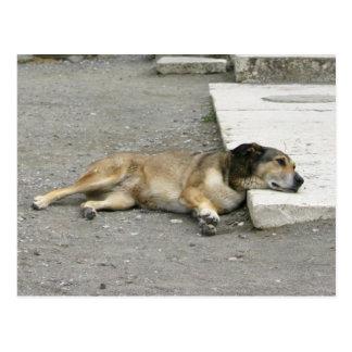 Tired Dog custom postcard