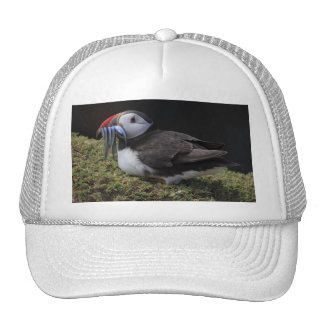 Tired Fisher Puffin Hat