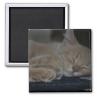 Tired Paws Square Magnet