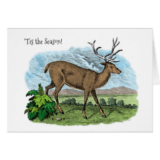 Tis the Season Deer Hunter Christmas Season Card