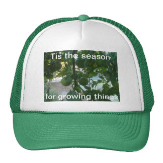 Tis the season for growing things  Hat
