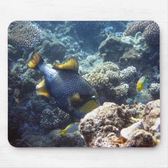 Titan Triggerfish on the Great Barrier Reef Mouse Pad