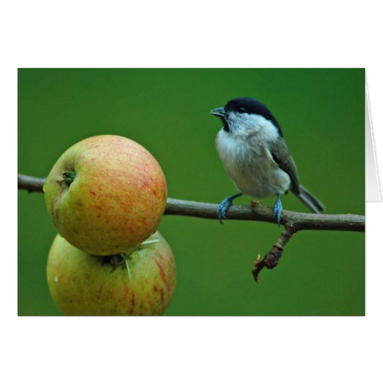 Titmouse and Cox Orange apples Card
