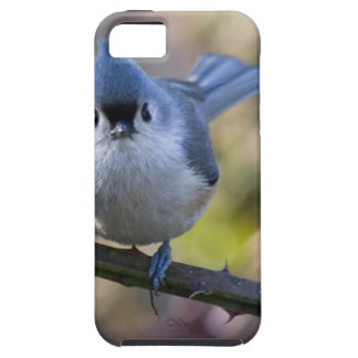Titmouse iPhone 5 Covers