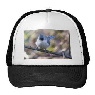 Titmouse Trucker Hat