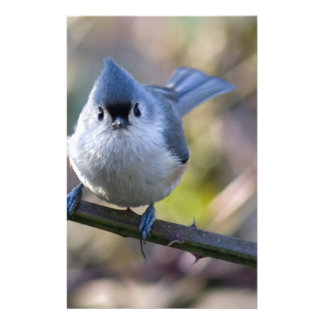 Titmouse Personalized Stationery
