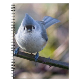 Titmouse Spiral Note Books