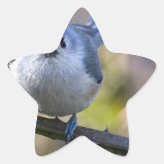 Titmouse Star Sticker