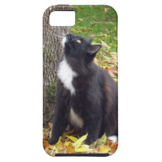 To Climb or Not - Kitty is Indecisive iPhone 5 Cases