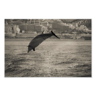 To jumping dolphin. poster