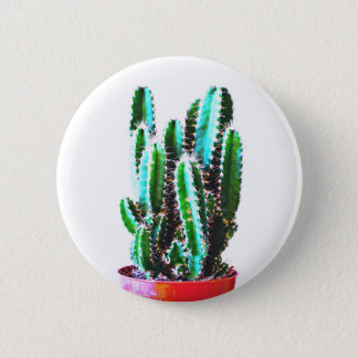 To plant - Button cactus