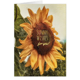 To the Sunshine in My Life Birthday Card