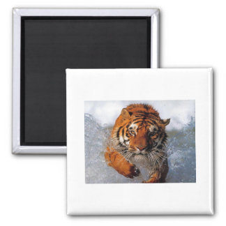 to tiger products refrigerator magnets