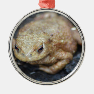 Toad Silver-Colored Round Decoration