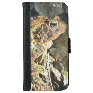 Toad Enjoying Basking in the Sun iPhone 6 Wallet Case
