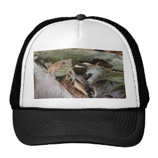 Toad Frog Hat