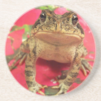 Toad frog standing up against bougainvillea back coaster