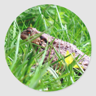 Toad in the grass round stickers
