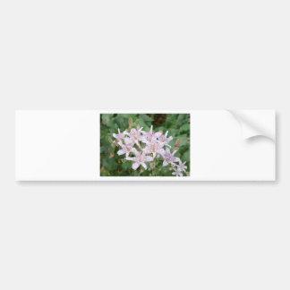 Toad Lilly Blossoms Tom Wurl Bumper Sticker