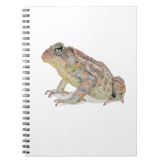Toad Notebook