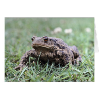 Toad notecard greeting card