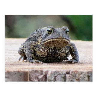 Toad on a Tree Stump Postcard
