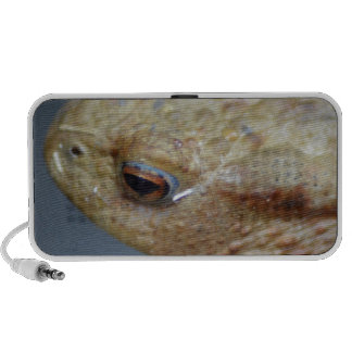 Toad Travelling Speakers