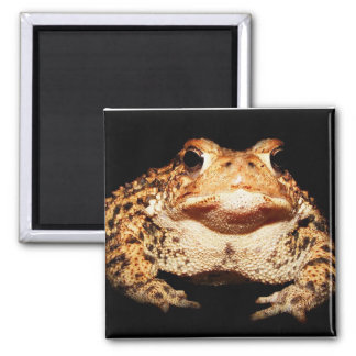 toad square magnet
