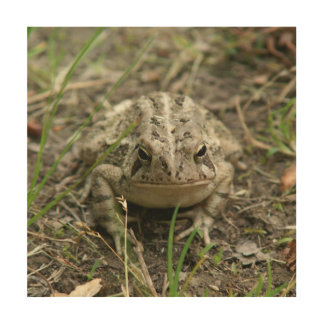 Toad, Wood Wall Art Print.