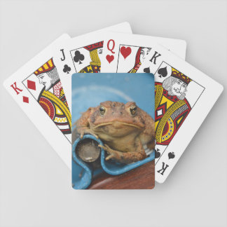 Toadly Love Blue Toad Playing Cards