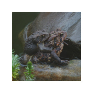 Toads Mating Stretched Canvas Prints