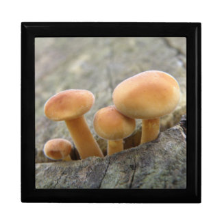 Toadstools on a Tree Trunk Gift Box