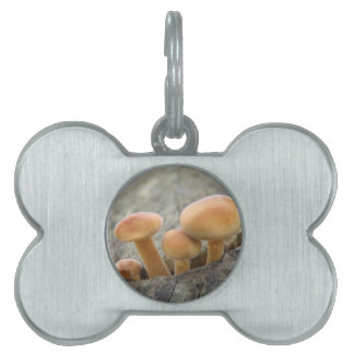 Toadstools on a Tree Trunk Pet Tag
