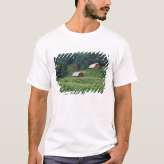 Tobacco crop and pair of red tobacco barns near T-Shirt