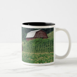 Tobacco crop and pair of red tobacco barns near Two-Tone coffee mug