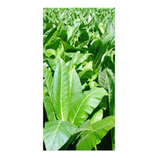 Tobacco field customised photo card
