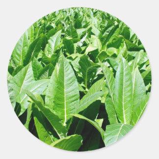 Tobacco field round sticker