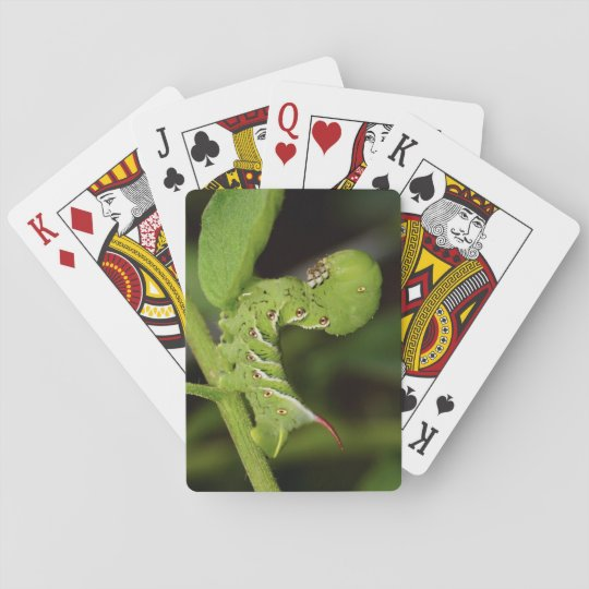 Tobacco Hornworm Caterpillar Playing Cards