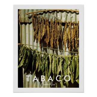 Tobacco Leaves: Puerto Rico Vintage Photo Poster