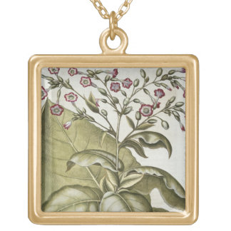 Tobacco plant, from the 'Hortus Eystettensis' by B Gold Plated Necklace