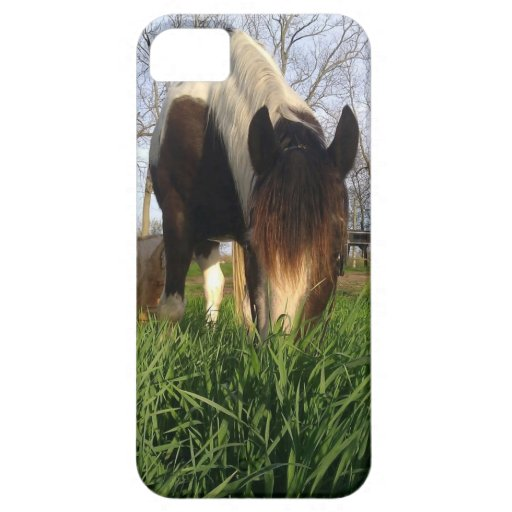 Tobiano Horse in grass Iphone Case iPhone 5 Covers
