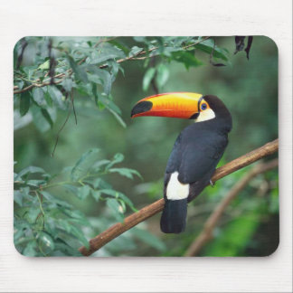Toco Toucan Bird Mousepad
