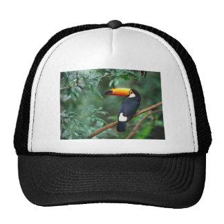 Toco Toucan Mesh Hats