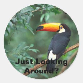 Toco Toucan, Just Looking Around? Round Sticker