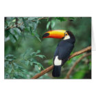 TOCO TOUCAN PHOTO FULL COLOR CARD