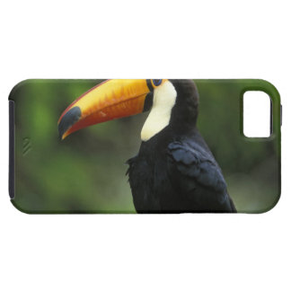 Toco Toucan, (Ramphastos toco), Iguacu National iPhone 5 Case